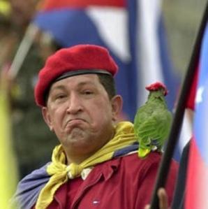 chavez-parrot